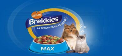 Brekkies regala bol personalizado para perros y gatos - Muestragratis.com