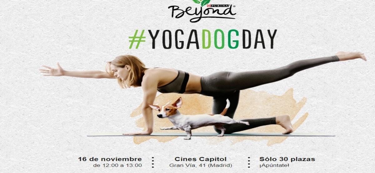 Purina Beyond te invita a participar al Yoga Dog Day - Muestragratis.com