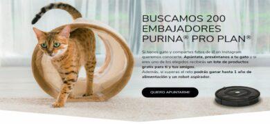 Gana Alimento Para Tu Gato Y Muchos Premios Más Con Purina Proplan