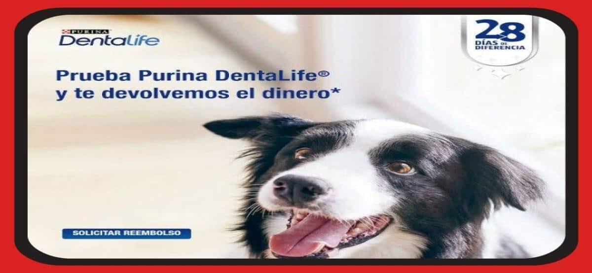 Consigue Tu Cash Back Con Purina Dentalife