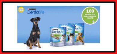 Protege La Dentadura De Tu Perro Con Dentalife Para Adultos