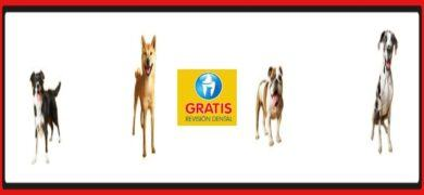 Consigue Una Revisión Gratis Dental Para Tu Perro